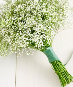 baby-breath-flower